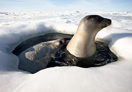 Foto: Uri Golman / Visit Greenland/Greenland.com)