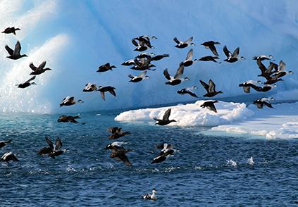 Foto: Aqqa Rosing-Asvid / Visit Greenland/Greenland.com)